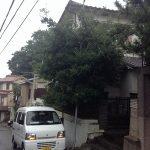 剪定・伐採 ~三田市すずかけ台~