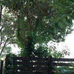 伐採・枝切り ~三木市緑ヶ丘町~
